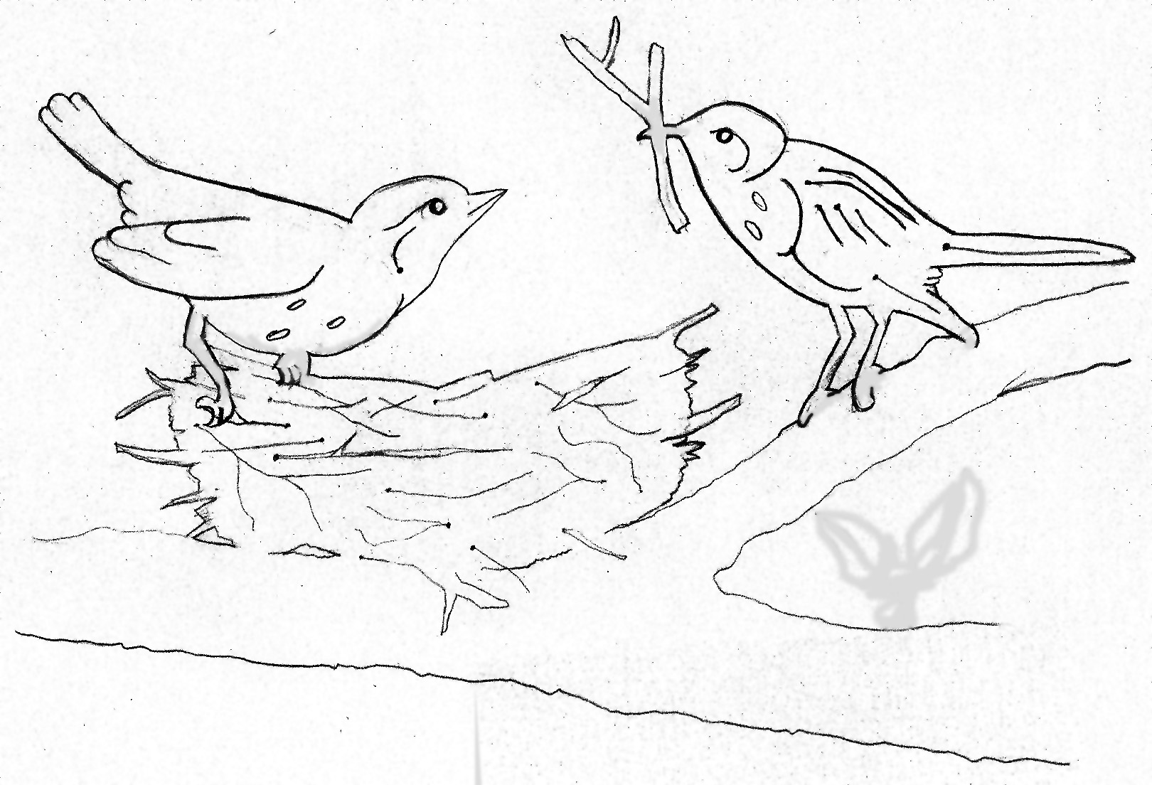 Bird Nest Drawing Birds building a nest